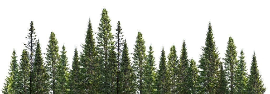 Commercio legname e tondame Alpilegno